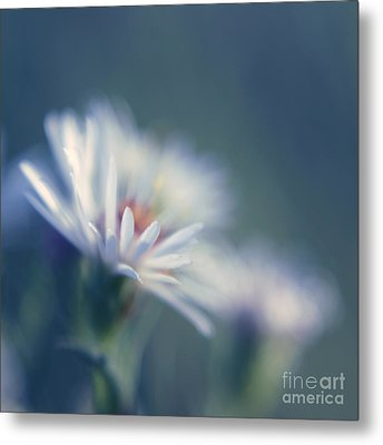 Innocence - 03 Metal Print by Variance Collections
