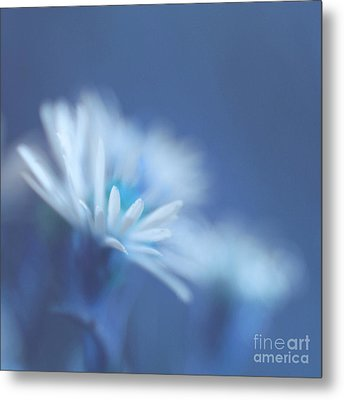 Innocence 11 Metal Print by Variance Collections