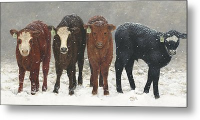 Inquisitive Calves Metal Print