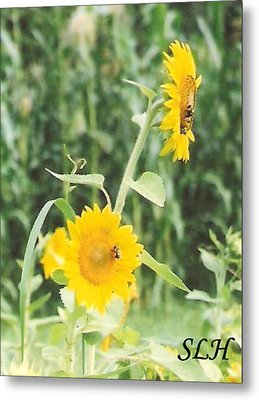 Insect On Sunflowers Metal Print