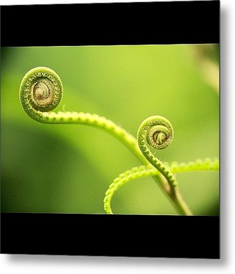 #instanaturelover #all_shots #cute Metal Print by Tommy Tjahjono