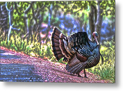Intense Tom Turkey Display Metal Print by Gregory Scott