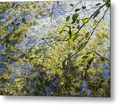 Metal Print featuring the photograph Into The River by Christine Drake