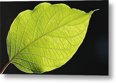 Intricacies Of A Leaf Metal Print by Mary McAvoy
