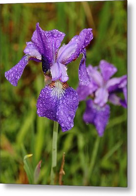 Metal Print featuring the photograph Iris Dew by Coby Cooper