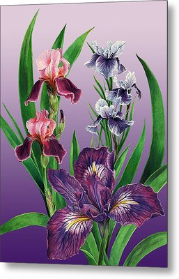 Iris On Purple Metal Print