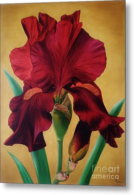 Metal Print featuring the painting Iris by Paula L