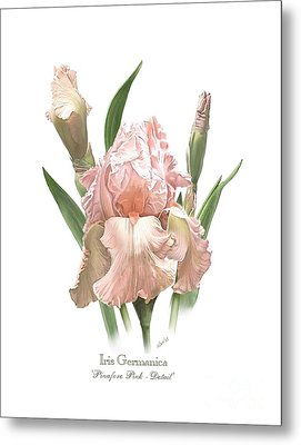 Iris Pinafore Pink Metal Print by Artellus Artworks