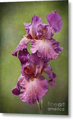 Metal Print featuring the photograph Iris With Raindrops by Cheryl Davis