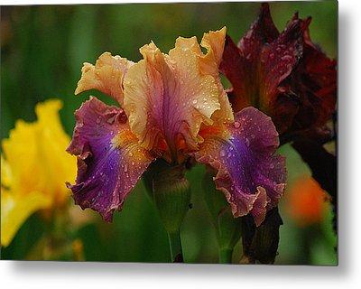 Irises In Indiana Metal Print