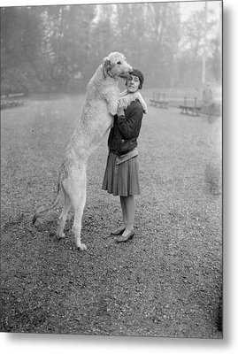 Irish Wolfhound Metal Print by Bellamy