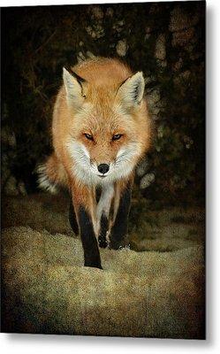 Metal Print featuring the photograph Island Beach Fox by Sami Martin