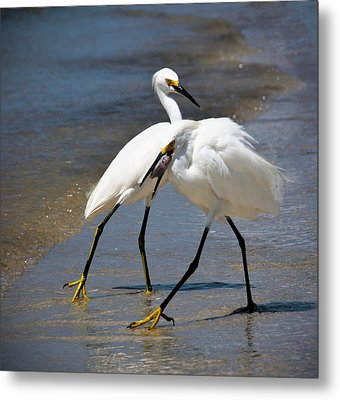 It Takes Two To Tango Metal Print by Vicki Jauron