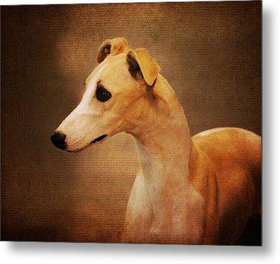 Italian Greyhound Metal Print by Jai Johnson