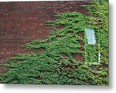 Ivy Covered Window Metal Print by Gary Slawsky
