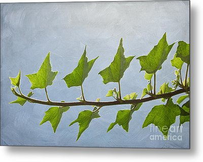 Ivy To The Left Metal Print