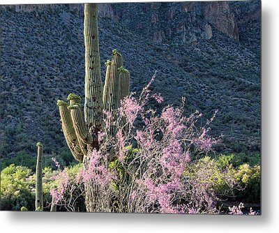 Jacarandas And Saguaros Metal Print by Nathan Mccreery