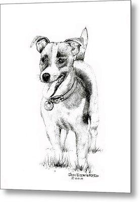 Jack Russell Terrier Metal Print by Jim Hubbard