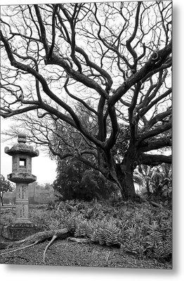 Japanese Lantern And Tree - Liliuokalani Park - Hilo Hawaii Metal Print