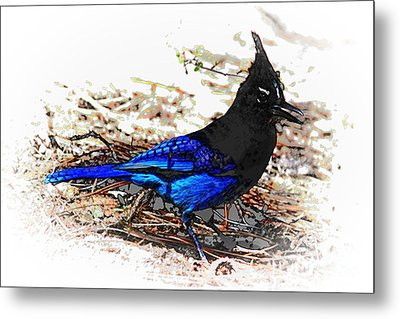 Jay On Pine Needles Metal Print by Val Armstrong