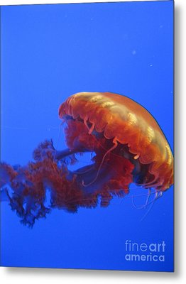 Jelly Metal Print