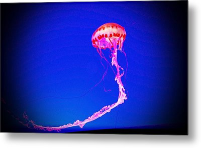 Jellyfish 4 Metal Print by Coconut Lime Design