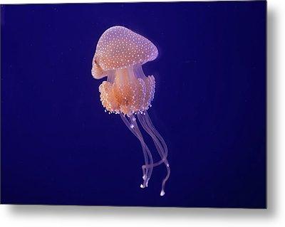 Jellyfish Metal Print by Pandiyan V