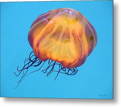 Metal Print featuring the photograph Jellyfish by Wendy McKennon