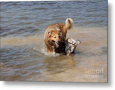 Metal Print featuring the photograph Jesse And Gremlin Sharing by Jeannette Hunt