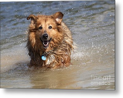 Metal Print featuring the photograph Jesse by Jeannette Hunt