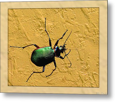 Metal Print featuring the photograph Jeweltone Beetle by Debbie Portwood