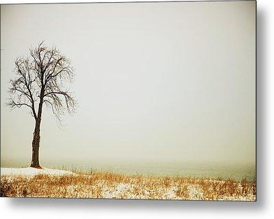 Jordan, Ontario, Canada A Tree Along Metal Print by Pete Stec