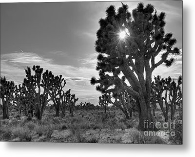 Joshua Tree National Preserve Metal Print by Eddie Yerkish