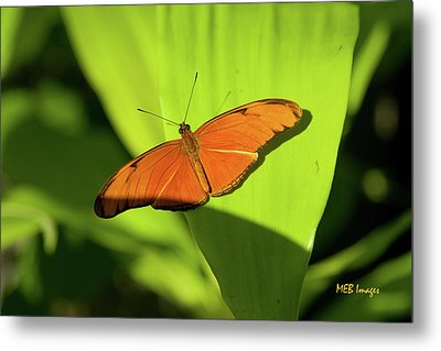 Julia Butterfly Metal Print by Margaret Buchanan
