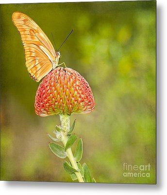Julia Longwing Butterfly On Exotic Flower Metal Print