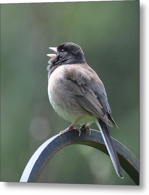 Metal Print featuring the photograph Junco Sings by Ronda Broatch