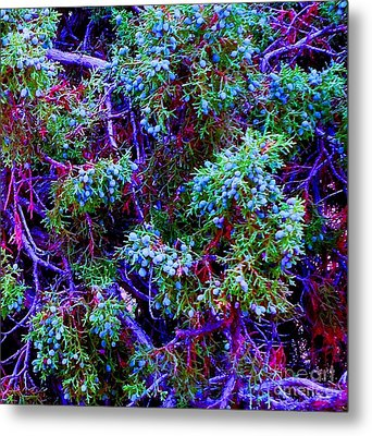 Metal Print featuring the photograph Juniper Neurons by Ann Johndro-Collins