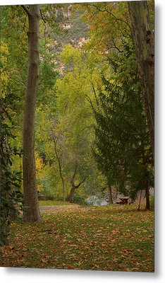 Metal Print featuring the photograph Junipine by Tom Kelly