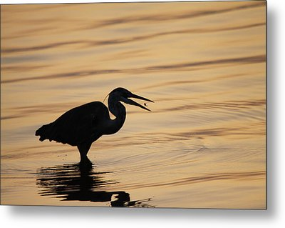 Just A Little Snack For Breakfast Metal Print by Jeanne Andrews