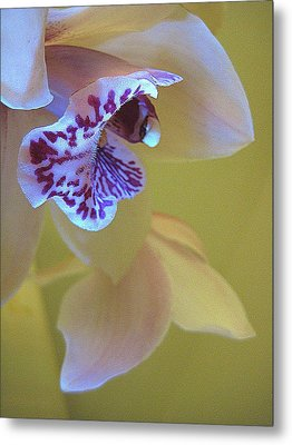 Just Being Here Metal Print by Shirley Sirois