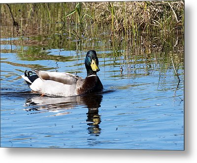 Just Duckie Metal Print