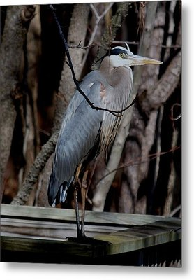 Just Hiding Out Metal Print by Larry Krussel