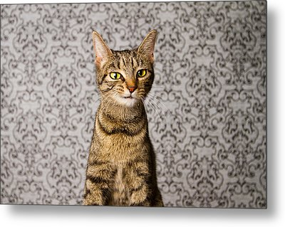 Just Little Weird Metal Print by Square Dog Photography