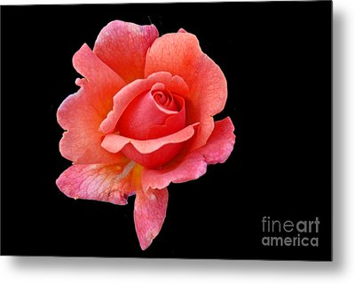 Metal Print featuring the photograph Just Peachy by Cindy Manero