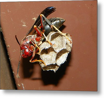 Just Try Me Metal Print by Chad and Stacey Hall