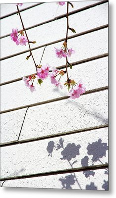 Kawadu Sakura Metal Print by Privacy Policy