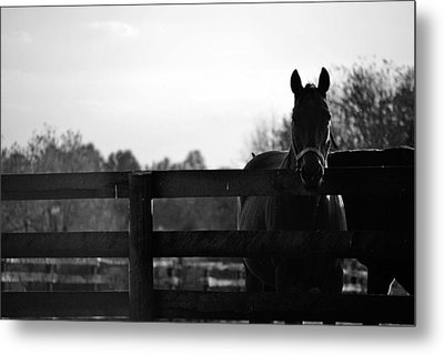 Kentucky Look Metal Print