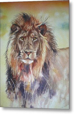 Kenyan Lion Metal Print by Sandra Phryce-Jones