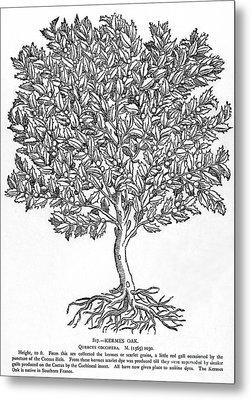 Kermes Oak Tree Metal Print by Granger