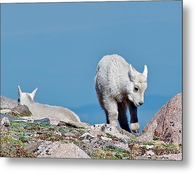 Metal Print featuring the photograph Kids On The Tundra by Stephen  Johnson